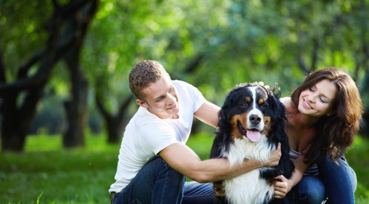 Cão: o melhor amigo do brasileiro